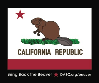 BEAVER FLAG STICKER 4 29