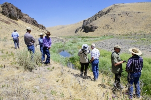 Grazing and Beavers to Restore Riparian Vegetation